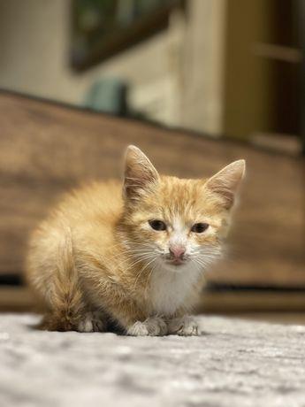 Маленька Кішечка