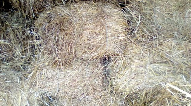 Продам сено тюкованое луговое