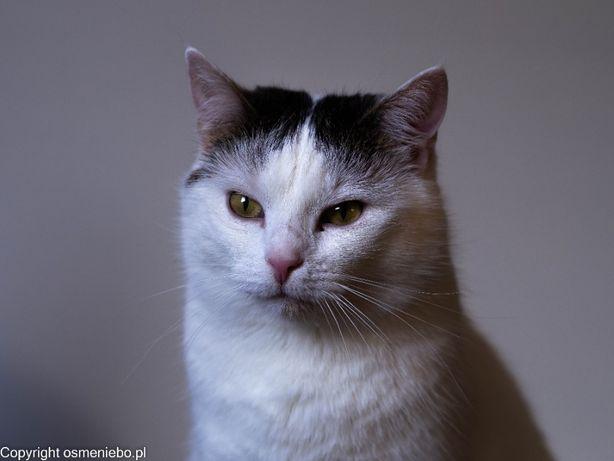 Sofia, imię zobowiązujące do piękności. Szukamy miłej kotce domu