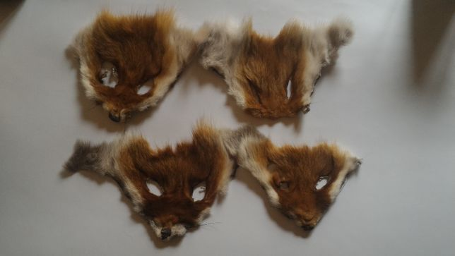 Мордочка лисички настоящая
