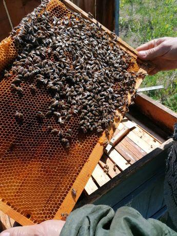 Бджоло пакети продам
