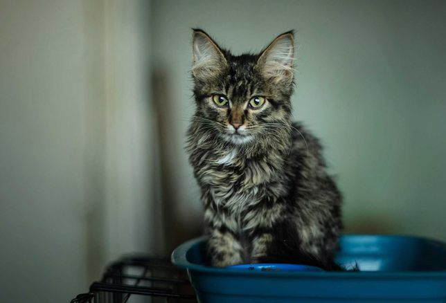 Котя мальчик, 2 месяца