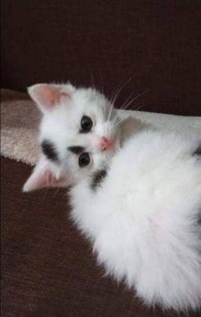 Kruszynka kotka do adopcji BARLINEK