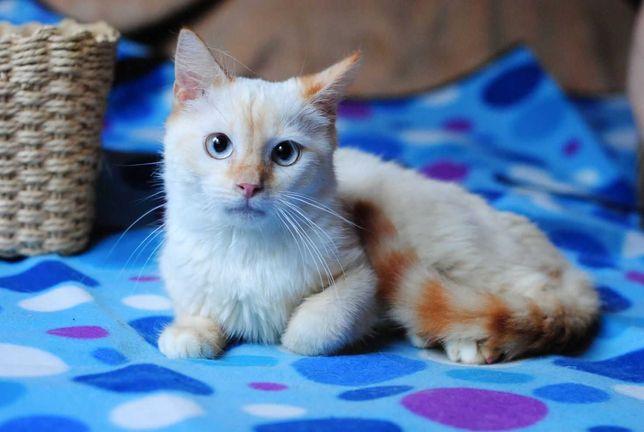 Отдам котенка мальчик7 месяцев