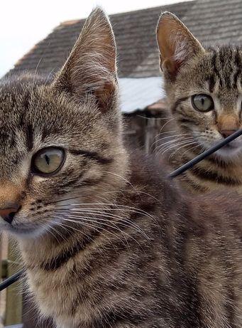 Będziemy grzeczne i kochane obiecujemy ale chcemy być razem koty kotki