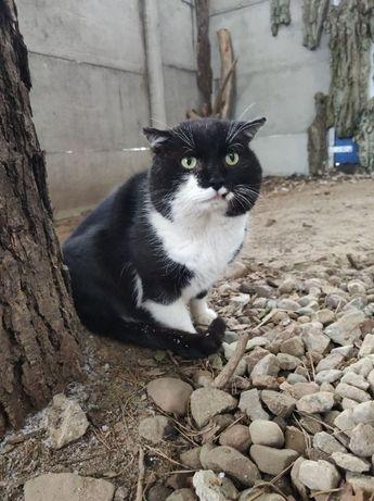 BRUNO - koci senior potrzebuje pilnie domu!