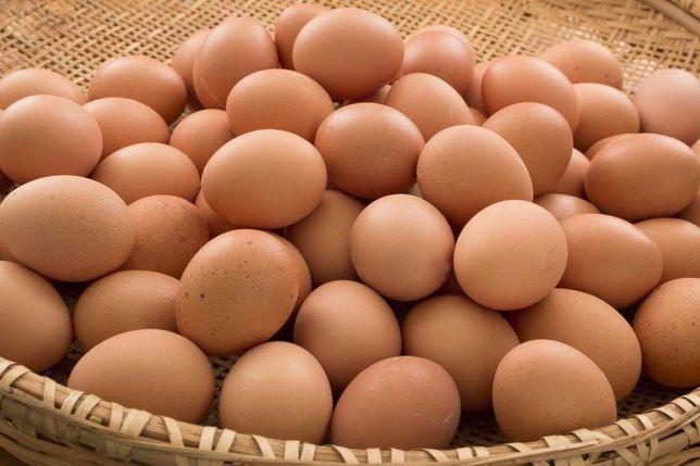 Ovos caseiros de qualidade