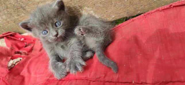 Віддам котенят в добрі руки. Безкоштовно Вінниця. 1 хлопчик, 2 дівчинк