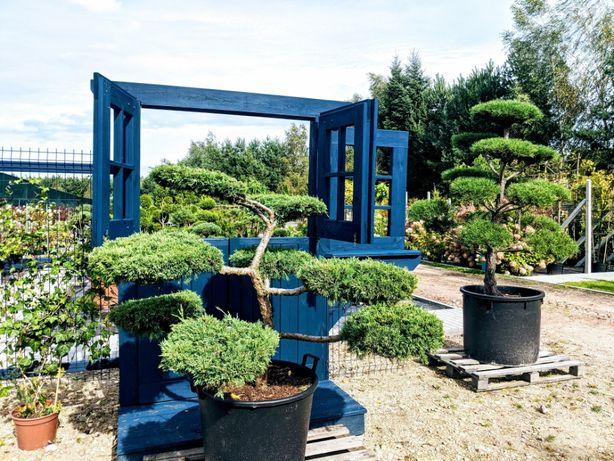 `Bonsai , rośliny formowane , niwaki