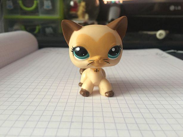 LPS Littlest Pet Shop shorthair kot unikat POP