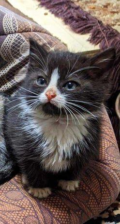 Милые котята в поисках дома