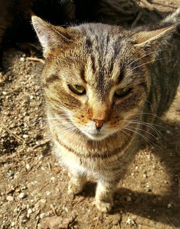 Liza kotka która bardzo kocha