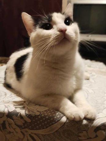 2 kotusie około 1,5 rocznei do pilnej adopcji Wioletta P