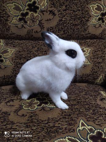 Карликовый самец кролик . Кролик декоративный, прямоухий