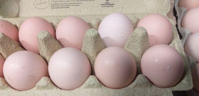 Jaja Wiejskie od rolnika! Tylko 0.80 gr !!