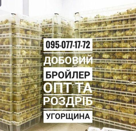 Бройлер Кобб 500 Росс 708 Венгрия Мулард Индюшата Биг6 Доминант куры