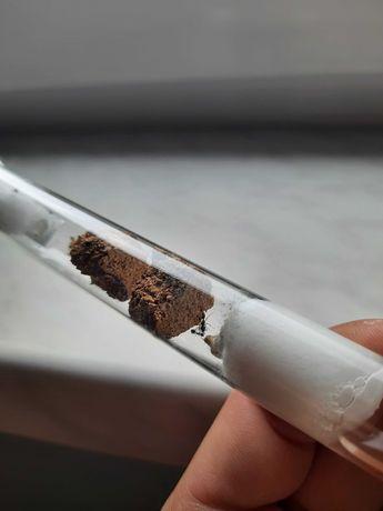 Kolonia mrówek Dolichoderus quadripunctatus z 2021 roku czterokropka