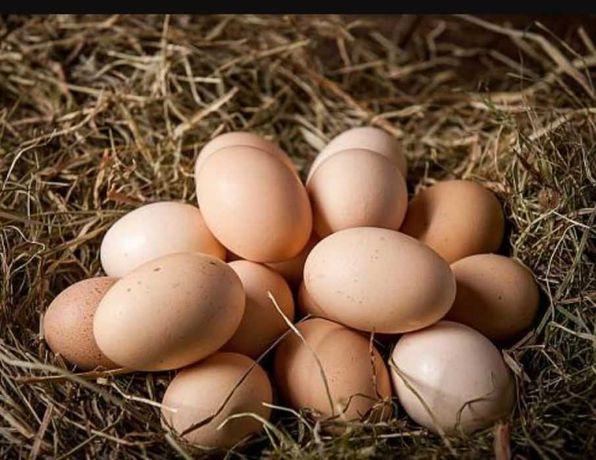 Sprzedam Jajka wiejskie od kur z wolnego wybiegu 70gr/szt.
