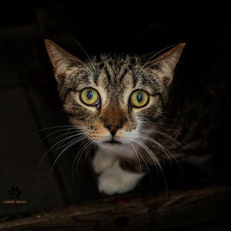 Dzień dobry, tu Rysiu, niewidzialny kotek :(