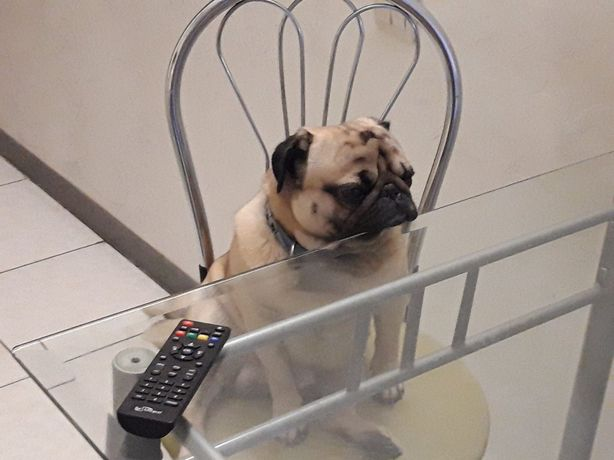 Домашняя передержка собак от 150 грн. в сутки.