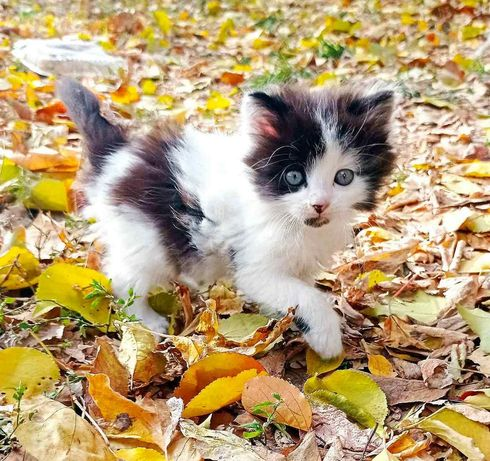 Ищет дом котенок, мальчик