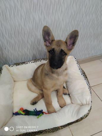 Собачка, щенок, девочка Викки, 4 месяца. В семью. Привита. Привезу.