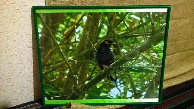 Фото рамка, картина в фотораме, Птица фоторамка