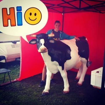 Krowa do dojenia