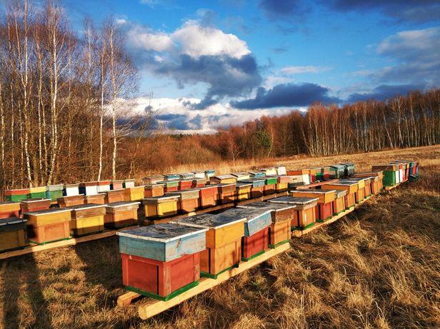 Pyłek pszczeli 2 kg. Pasieka Pod Jarmową Górą