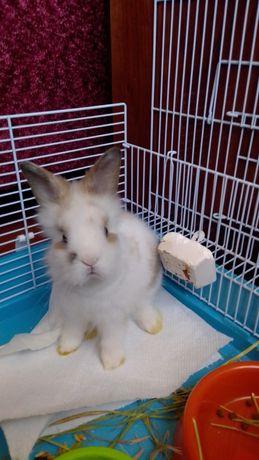 Декоративный кролик .
