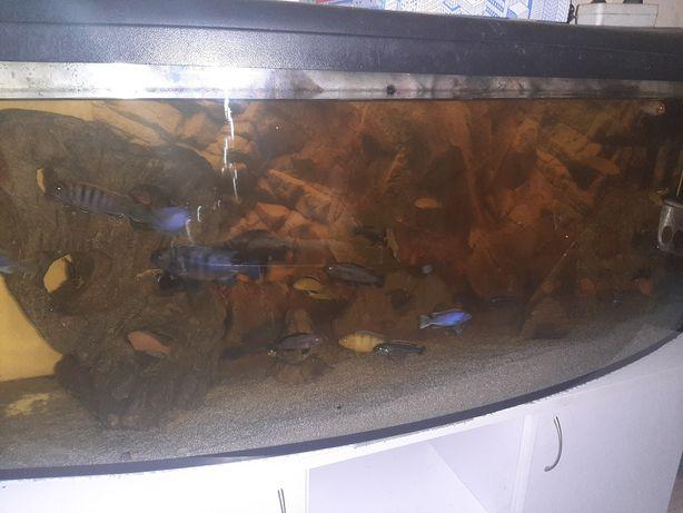 Pyszczaki * akwarium* szafka pod akwarium *