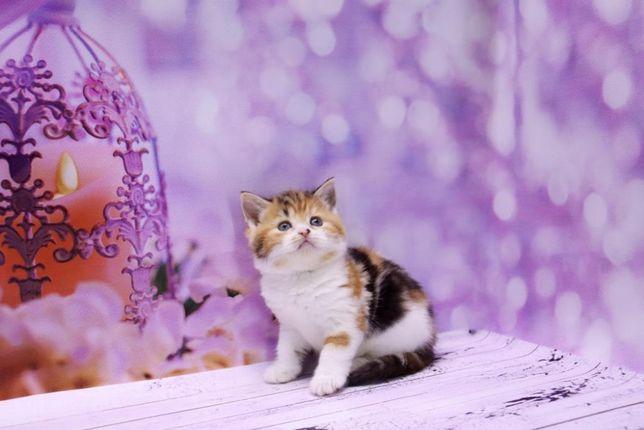 Очаровательная кошечка в красивом окрасе