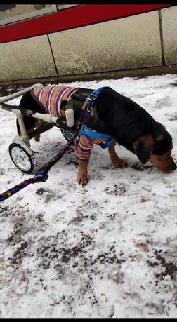 Инвалидная коляска для собачек и котиков.