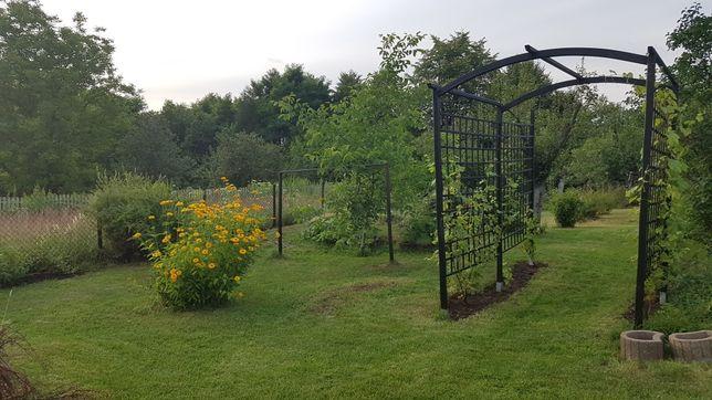 Pomogę w ogrodzie, sadzie, winnicy.