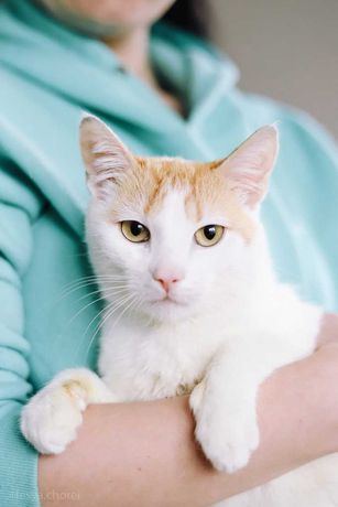 Митя - рыжий кот бесплатно