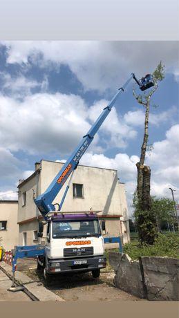 Profesjonalna wycinka oraz podcinka drzew podnośnik przycinka  zwyżka