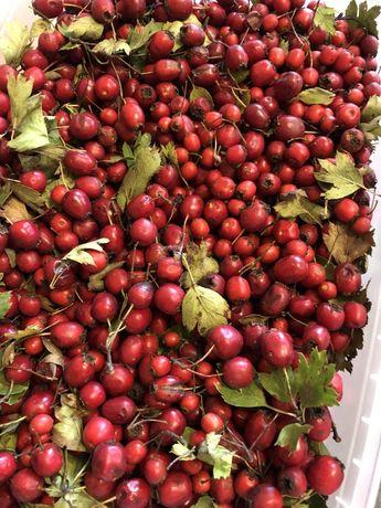Плоды боярышника сушеные