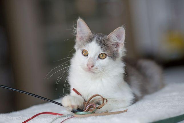 Волшебный и пушистый котенок