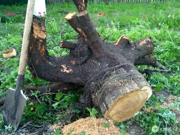 Корчевание пней спил деревьев покос травы и многое другое