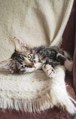 Очень ласковый и красивый котик ищет семью возраст 2,5 месяца