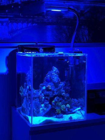 Akwarium morskie z życiem