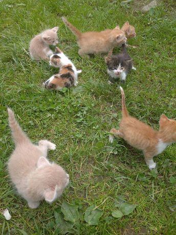 Кошенята безкоштовно