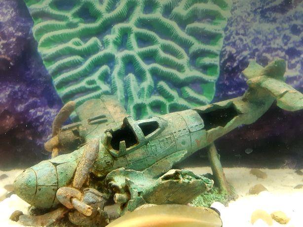 Avião para aquário