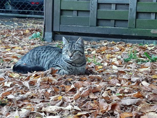 Przygarnij kotka na zimę do ciepłego domu