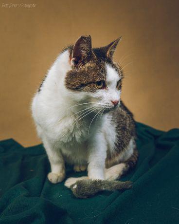 Czy starsza kotka ma szansę na dom? Pokochaj podczciwą Zuzię! Kot