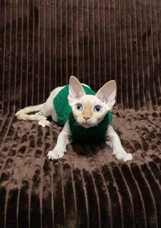 Котёнок девон рекс
