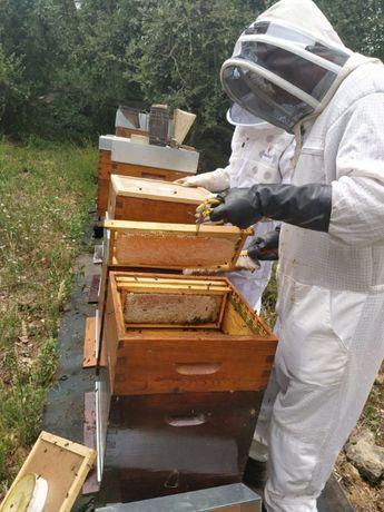 enxames de abelhas