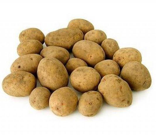 Ziemniaki jadalne młode SATINA , GALA , VINETA
