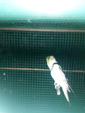 Aves muito bonitas