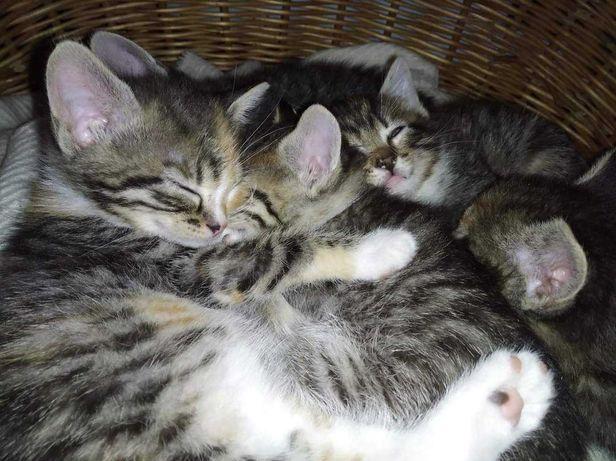 3- miesięczne kotki szukają swoich kochających domów